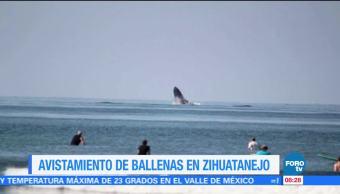 Extra, Extra: Ballenas sorprenden a turistas de Ixtapa Zihuatanejo