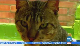 Extra Extra: Gatos callejeros invaden Tamaulipas