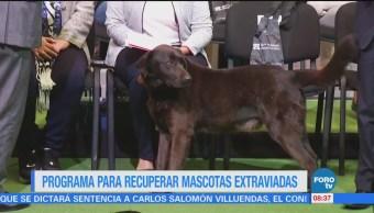 Extra Extra: Programa para recuperar mascotas extraviadas