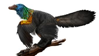 Científicos anuncian descubrimiento del 'dinosaurio arcoíris' en China