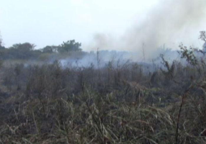Quemas agrícolas causan incendios forestales en Veracruz