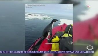 Pingüino salta a un barco