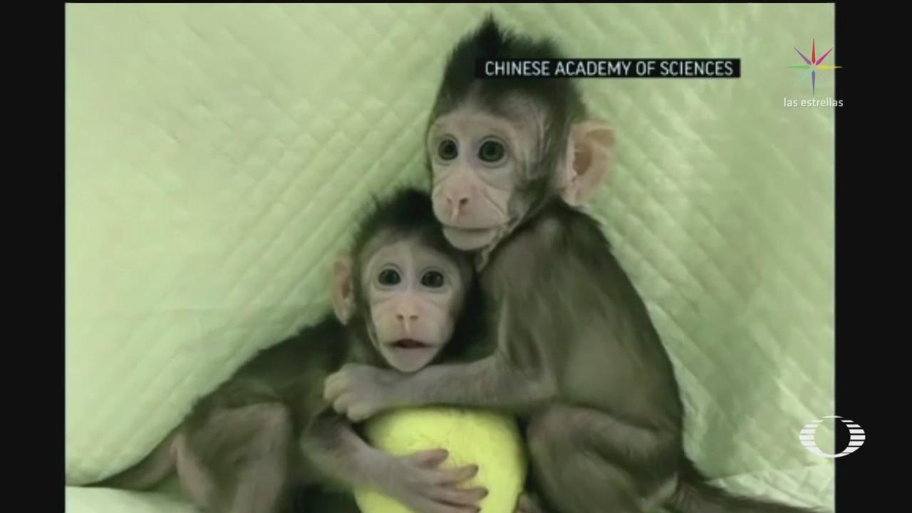 Por primera vez científicos chinos clonan dos monos