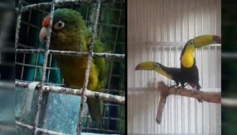 Aseguran aves exóticas en dos inmuebles en la Ciudad de México