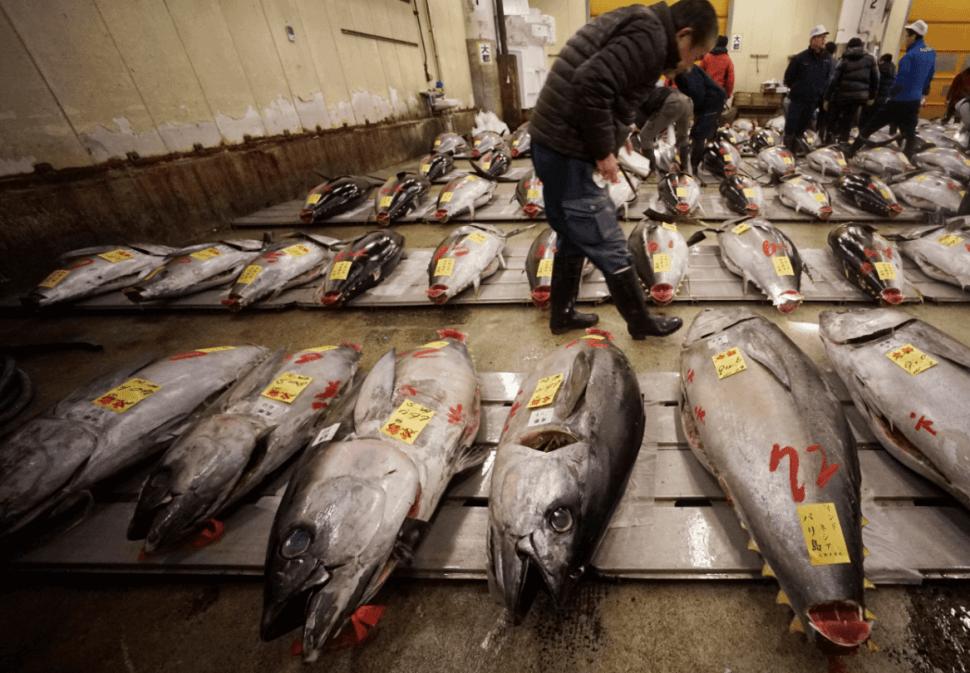 Subastan atunes en Tokio. (AP)
