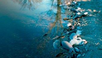basura-plastico-mares-limpios-onu-ecologia-contaminacion