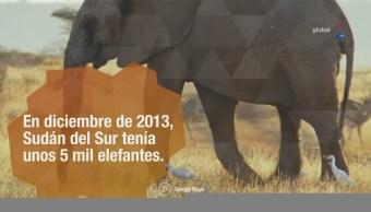 Animales muertos por guerra en África