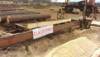 Clausura Profepa dos aserraderos en el 'Triángulo Dorado'. (Sitio Oficial)
