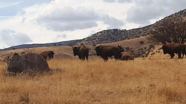 Incautan otros cuatro ranchos a César Duarte; hallan ganado de programa social