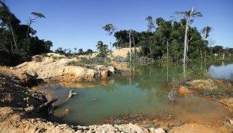 ¿Qué tan cerca está el Amazonas del colapso?