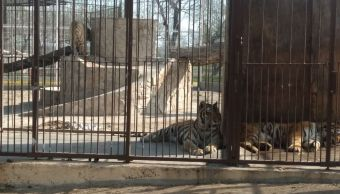 Descubren parque ecológico abandonado con animales vivos en Reynosa