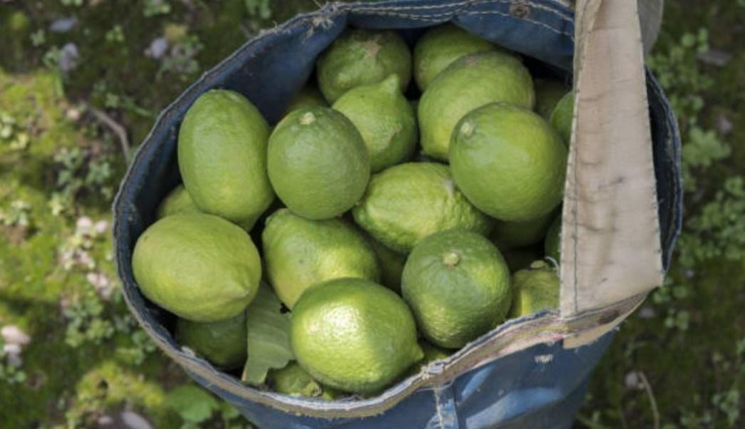 Evalúan afectación de cultivos por lluvias y vientos en Colima