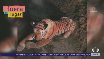 Fuera de Lugar: Policías rodean a tigre de peluche
