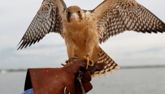 Águilas y halcones apoyan terapias para niños que sufren acoso y abuso
