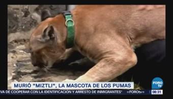 Extra Extra: Murió 'Miztli', la mascota de los Pumas
