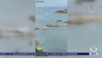 Orcas pasan entre dos jóvenes nadadores en Nueva Zelanda