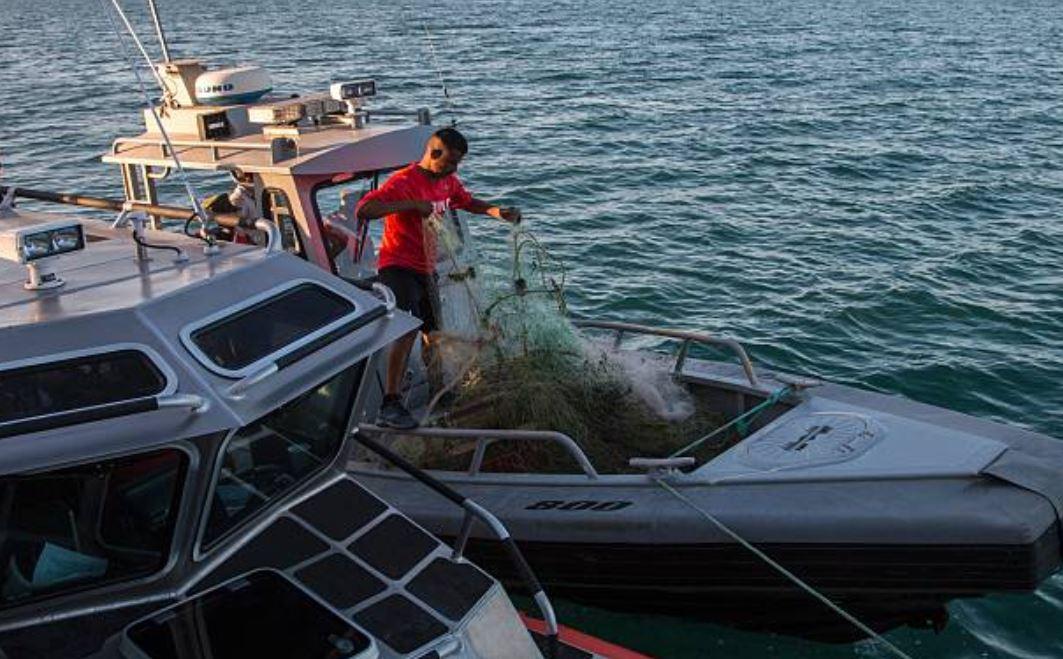 Con 3 ejes de acción, refuerzan rescate de vaquita marina