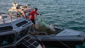 En riesgo, pescadores y vaquina marina por tráfico de totoaba