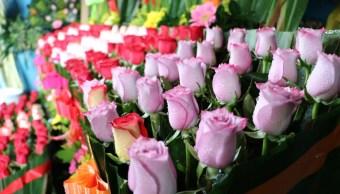 productores de rosas garantizan abasto del producto