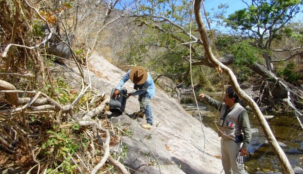 Profepa asegura y reintegra en su hábitat a 49 ejemplares de vida silvestre en Morelos
