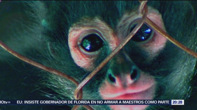Tráfico de especies en peligro de extinción