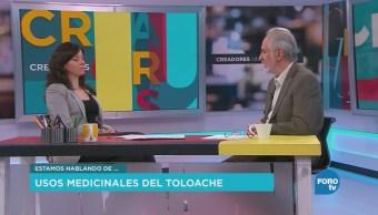 José Luis Díaz habla sobre los sos medicinales del Toloache