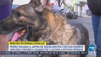 Aerolínea envía por error un perro a Japón