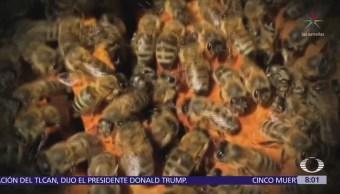 Alertan sobre disminución de la población de abejas en el mundo