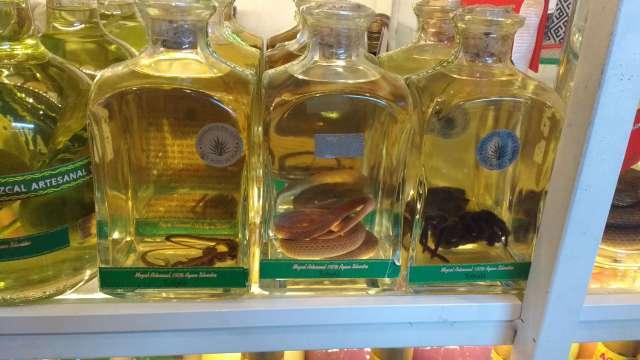 Aseguran 15 botellas de mezcal con reptiles y arácnidos en Oaxaca