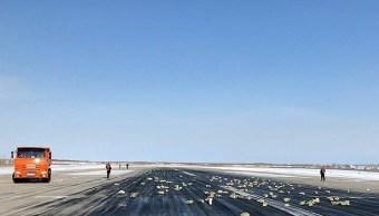 avion tira oro sobre pista de aterrizaje en yakustk rusia