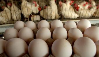 La Cofece detecta prácticas monopólicas en mercado de huevo