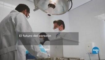 Crean Tejido Cardíaco Podría Sustituir Implantes Corazón
