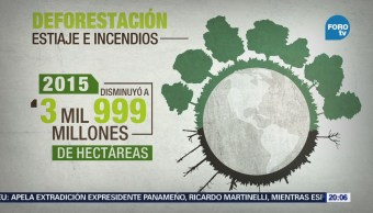 En el presente siglo se redujo 50 la deforestación: FAO