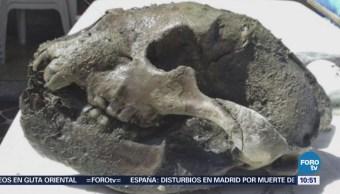 Extra Extra: Hallan restos de oso gigante en Argentina