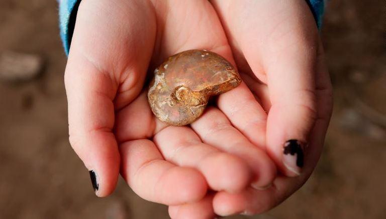 Niña encuentra fósil de 65 millones de años de antigüedad en EU
