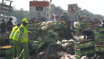 Volcadura de tractocamión deja 150 gallinas muertas en Ecatepec