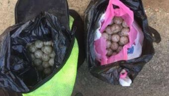 Aseguran 600 huevos de tortuga marina en Oaxaca