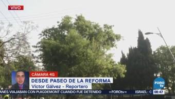 Intentan rescatar changuito en Paseo de la Reforma, CDMX