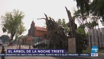 La historia del Árbol de la Noche Triste