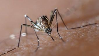 juarez inicia campaña contra el dengue