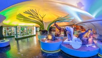 remodelan museo historia natural ciudad mexico
