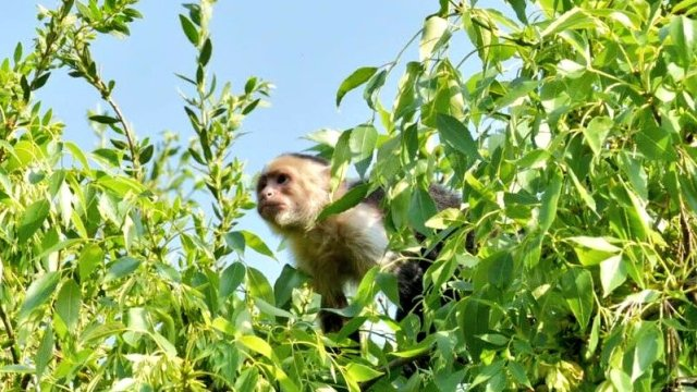 Personal del Zoológico de Chapultepec intenta rescatar a mono