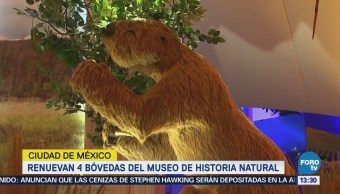 Renuevan Galerías Museo Historia Natural Cdmx