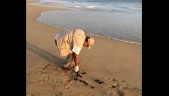 Profepa libera 20 crías de tortuga Golfina en Guerrero