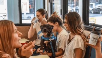 Cafetería para perros y dueños en Nueva York