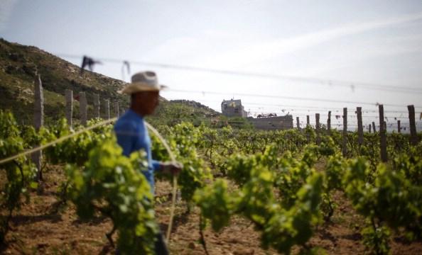 California resiente falta de mano de obra migrante ante redadas del ICE