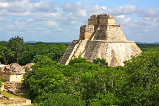 INAH descubre plantas medicinales en zona arqueológica de Uxmal, Yucatán