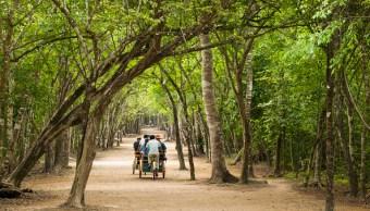 Indígenas mayas inician reforestación en selvas yucatecas