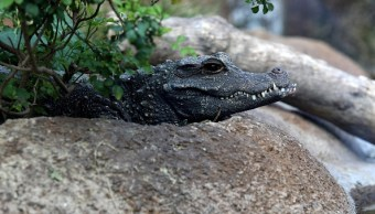 museo cocodrilo principales atractivos turisticos oaxaca