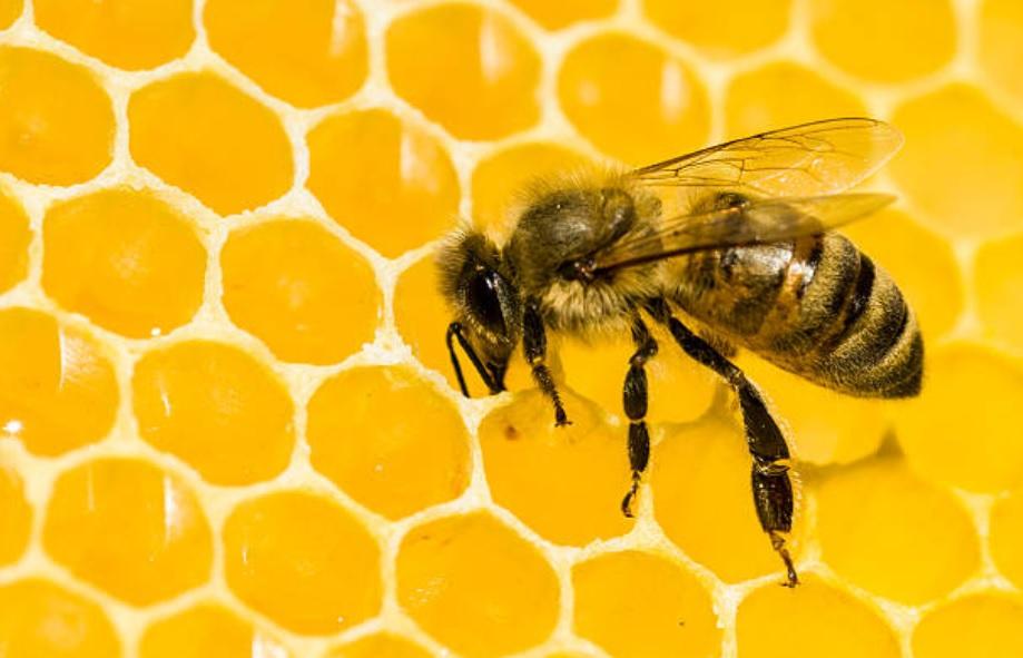 sequia afecta produccion miel abeja campeche